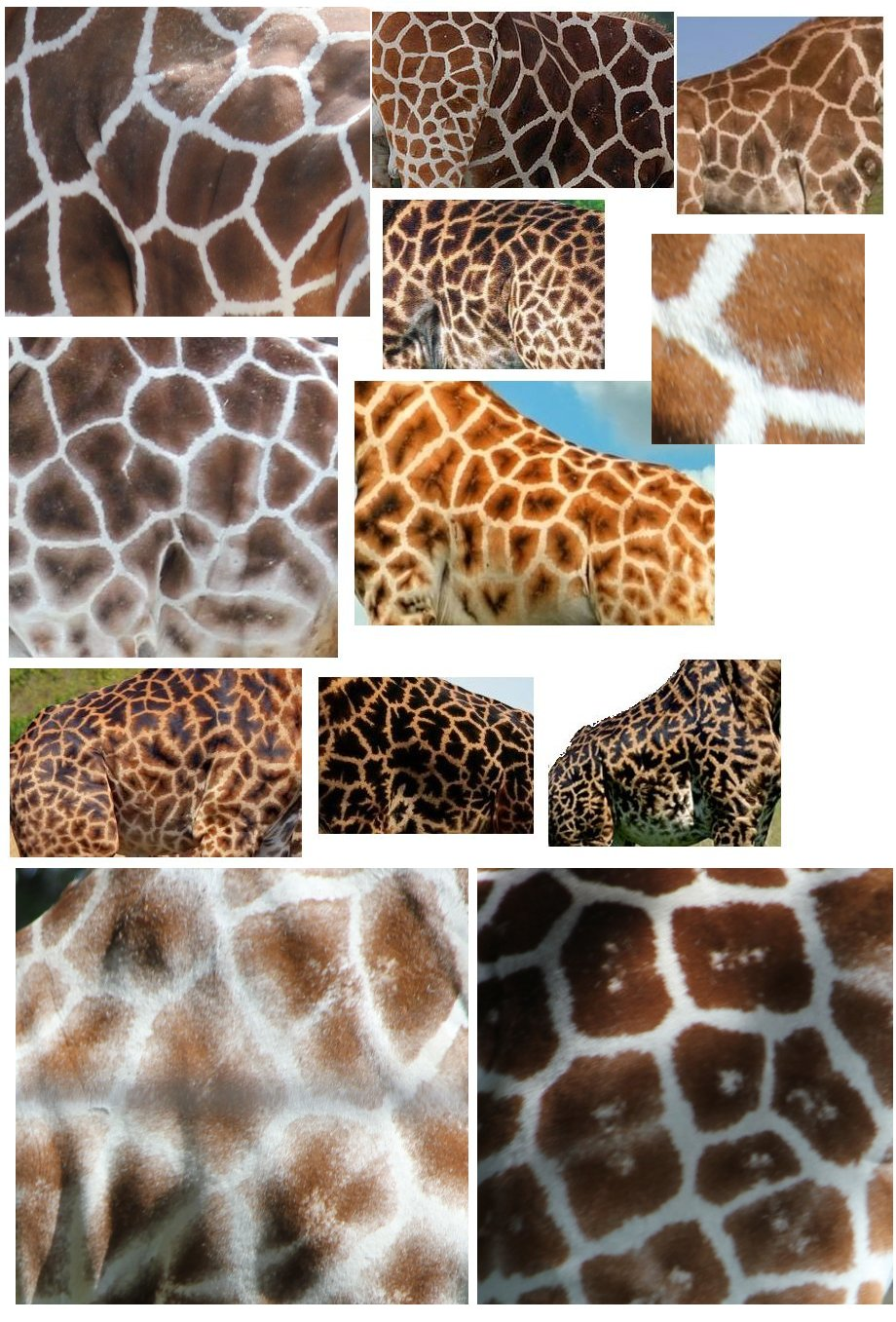 Nine Different Ways You Can Put Your Goals In Writing: Reticulated Giraffe Pattern